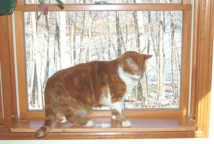 Cat Window Perch | eBay