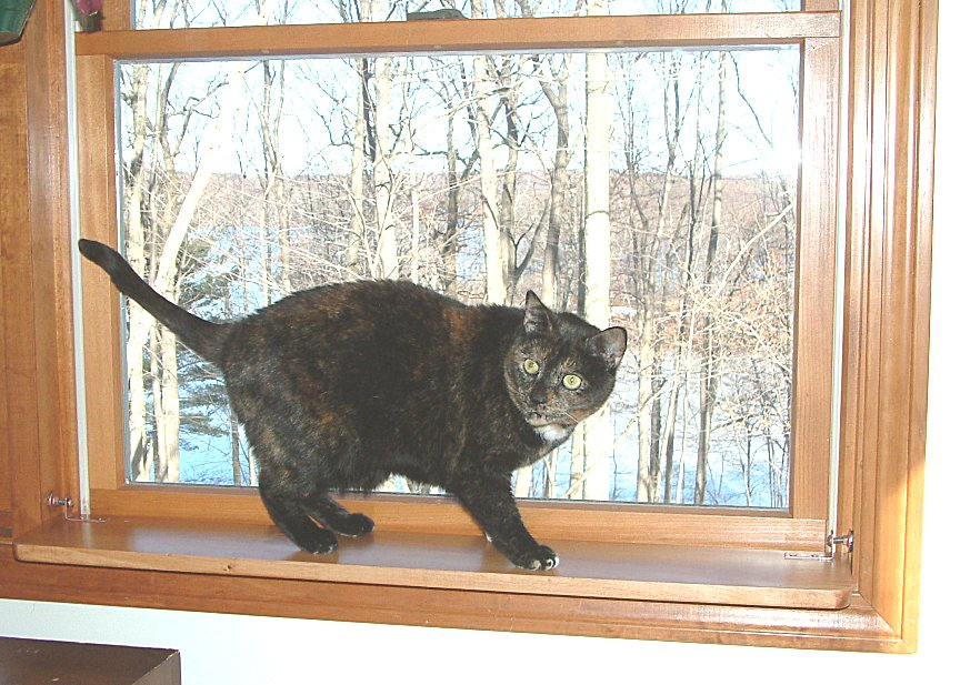 just the brackets for diy window shelf cat perch ebay. Black Bedroom Furniture Sets. Home Design Ideas